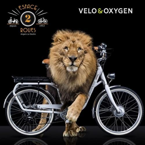 Revendeur Cycles Peugeot - Velo&oxygen